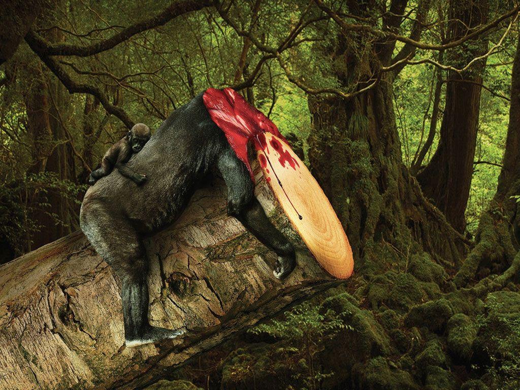 Déforestation : quand on sacrifie des arbres, on sacrifie les animaux sauvages