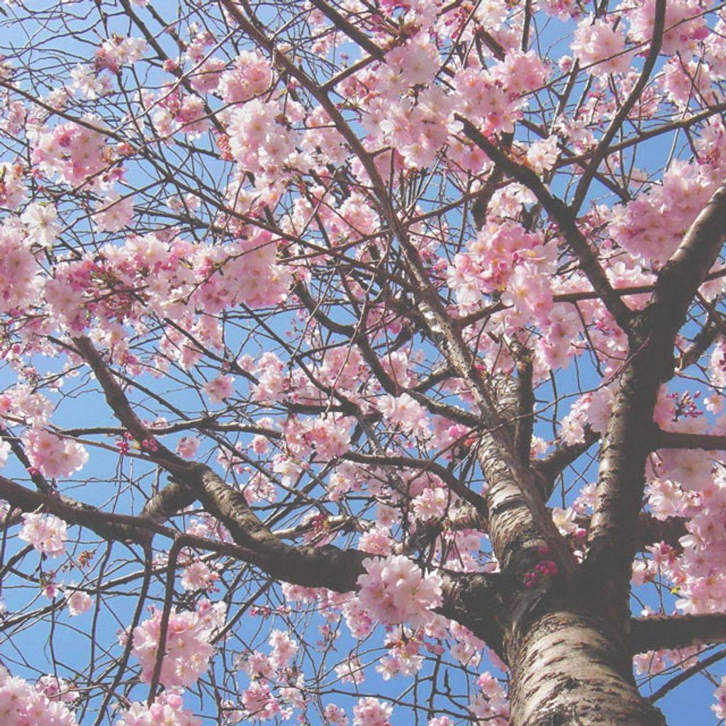 5 bonnes raisons de ne pas se réjouir du retour du printemps