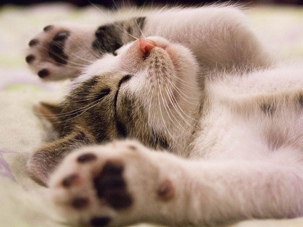 Cette clinique vétérinaire qui recrute un câlineur pour chats