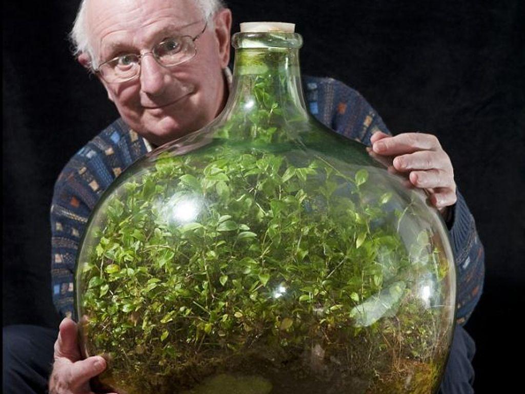 Cette plante est enfermée depuis 57 ans dans une bouteille et n'a été arrosée qu'une seule fois !