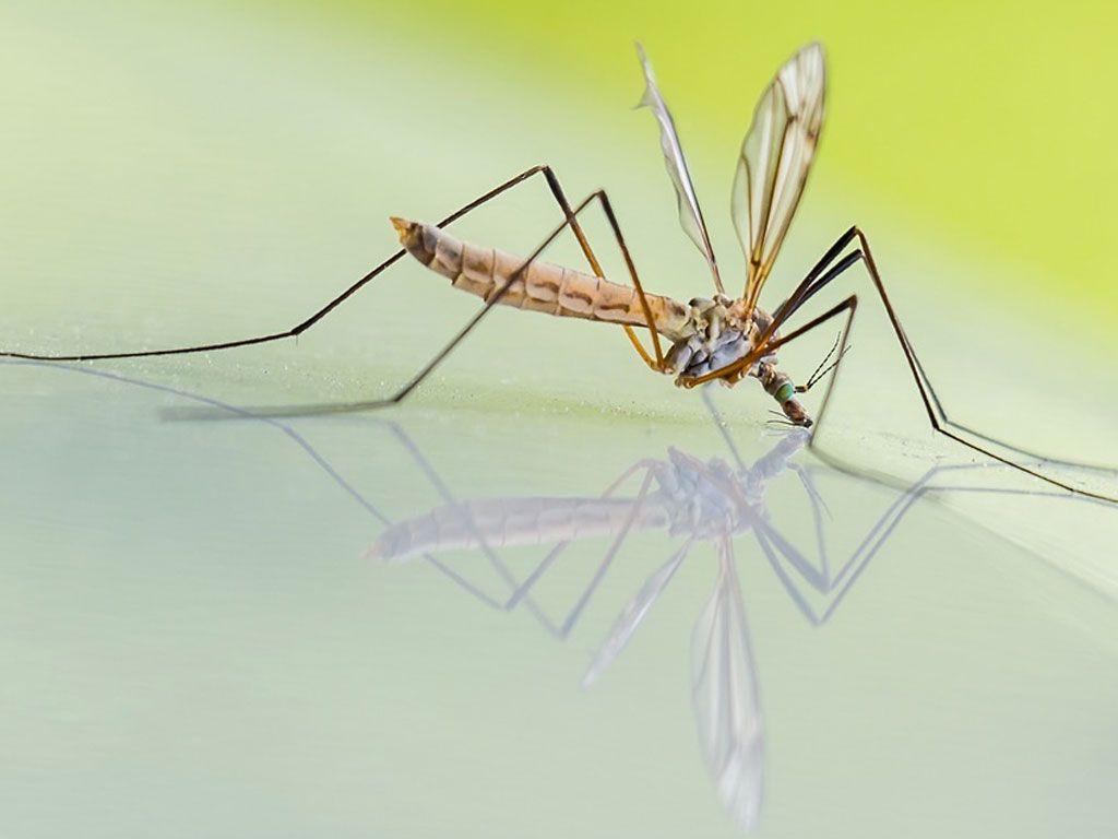 Comment éviter les piqûres de moustiques de manière naturelle
