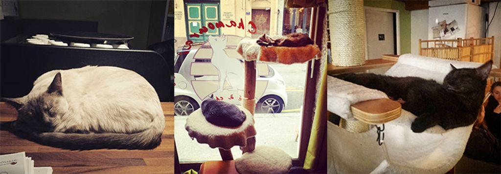 Le Chamouraï, le café des chats de Lyon