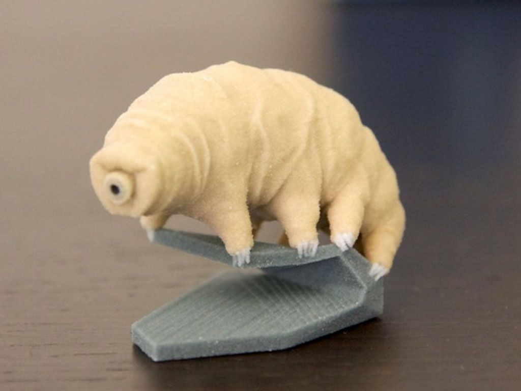 Le (micro) monde fantastique des tardigrades