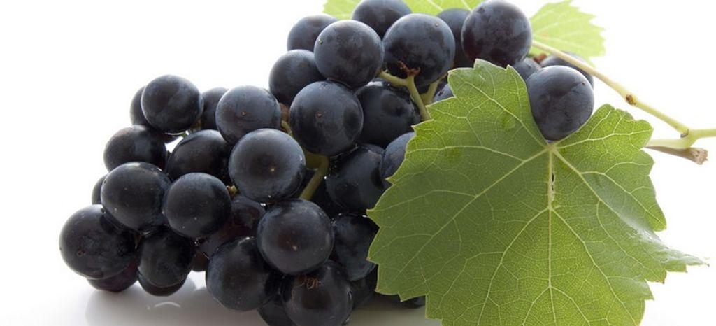 Le resveratrol, une solution anti-vieillissement 100% naturelle