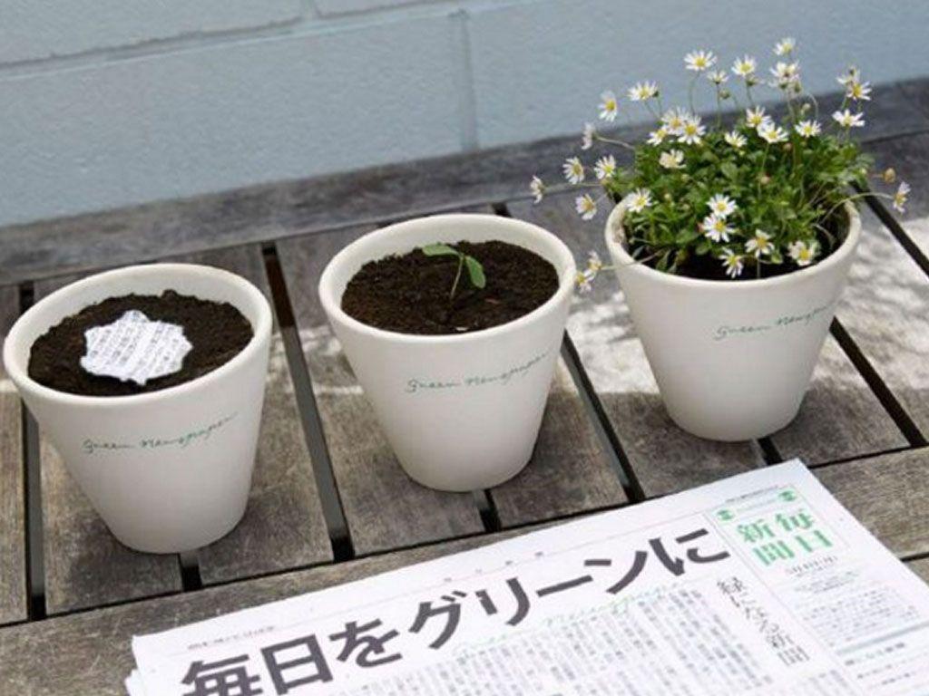 Mainichi est un quotidien japonais qui fleurit quand on l'arrose !