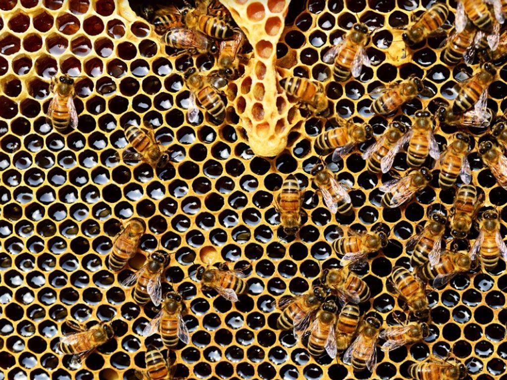 Pourquoi les vegans ne mangent-ils pas de miel ?