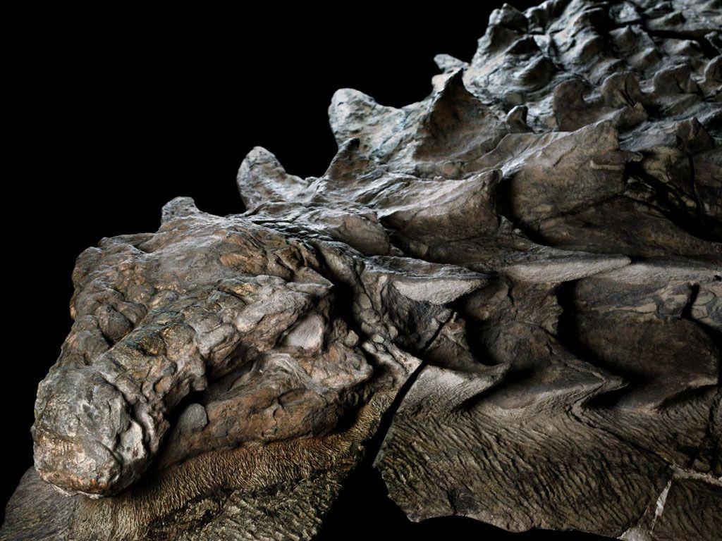 Un fossile de dinosaure incroyablement bien conservé pour ses 110 millions d'années