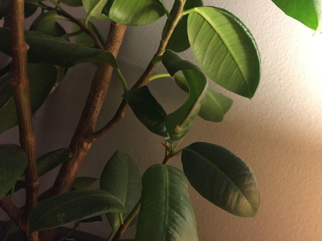 Plantes d'intérieur pour un air plus sain