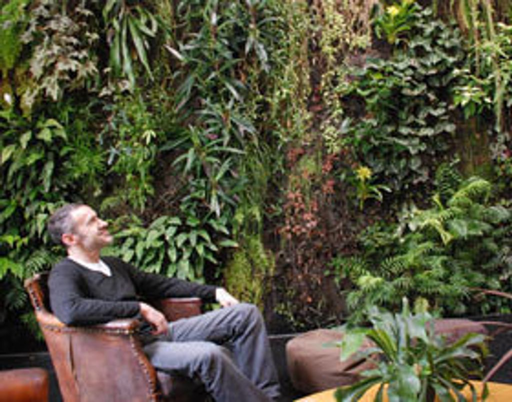 La vie à l'ombre... d'un mur végétal
