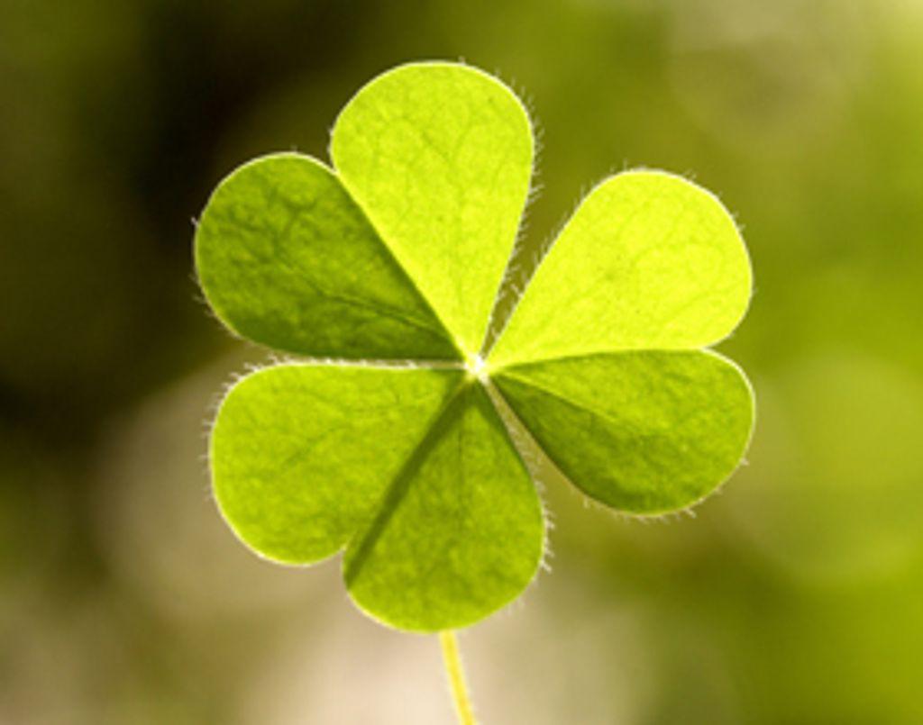 On adore l'Irlande !