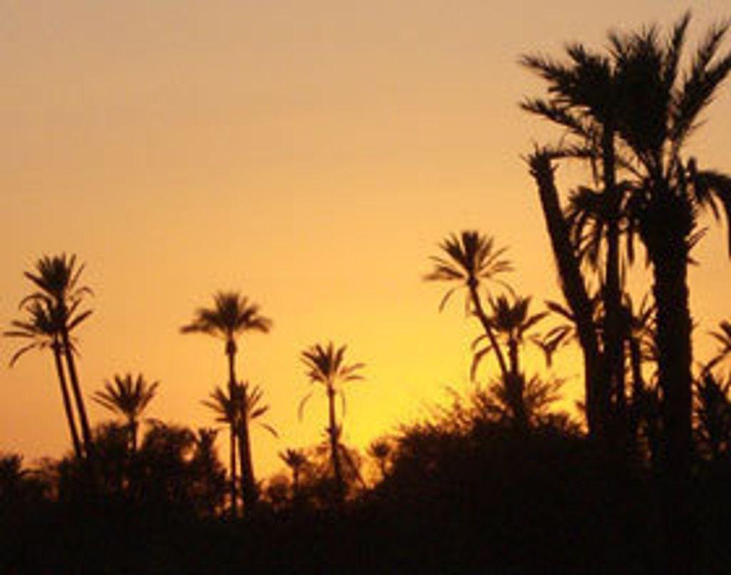 Saint-Sylvestre orientale à Marrakech