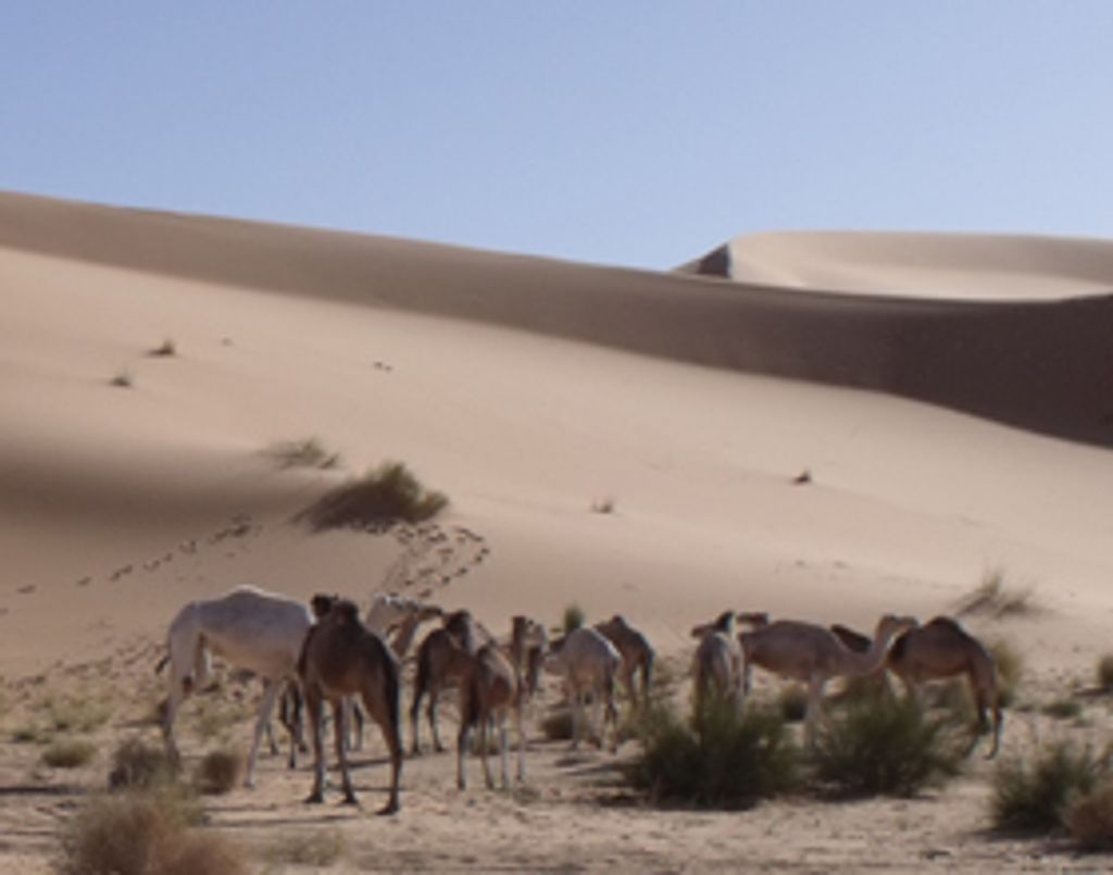Ma 1ère fois dans le désert en Algérie...