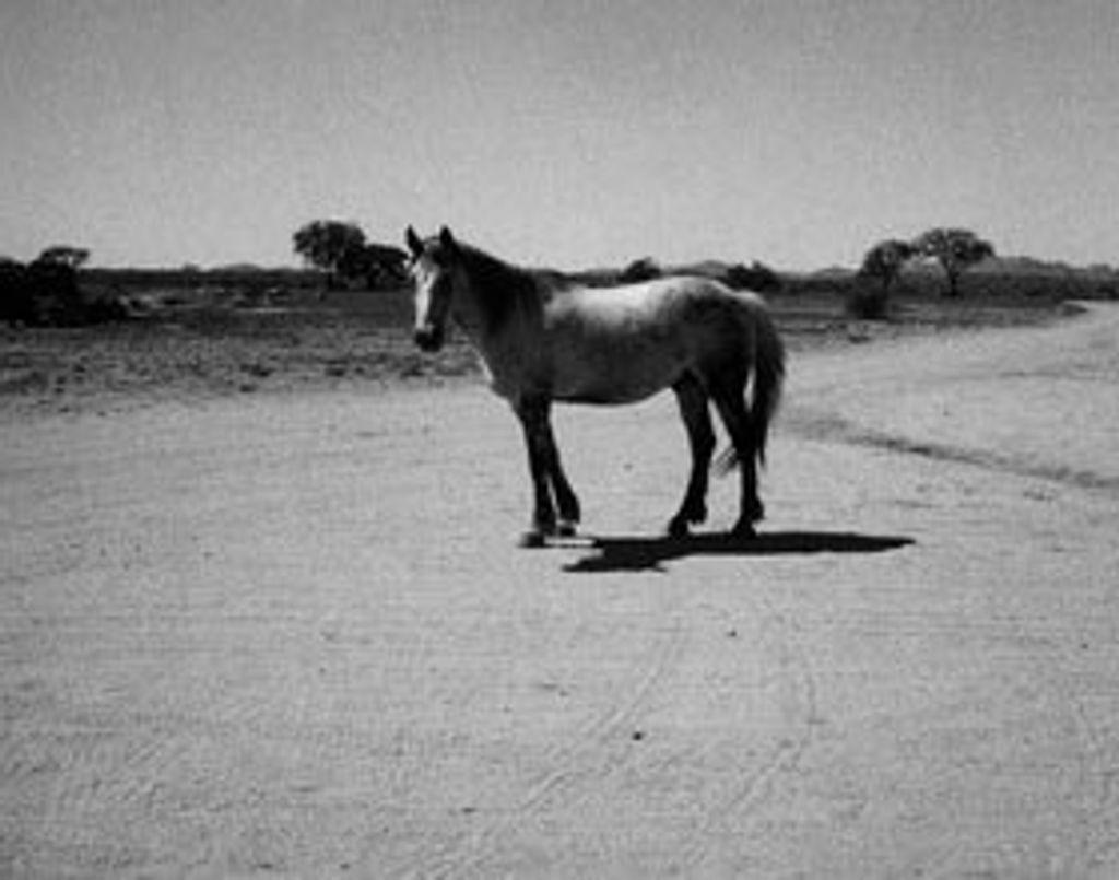 """""""Land 250"""", l'exposition de Patti Smith"""