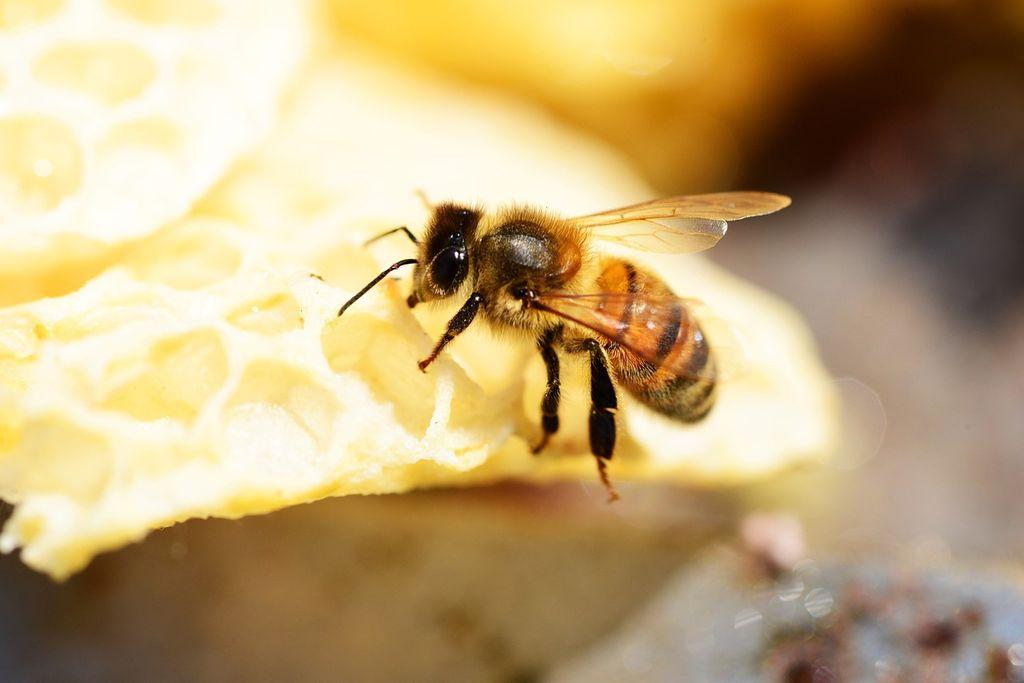 Le miel pour les nourrissons, un véritable poison